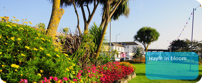 Hayle in bloom